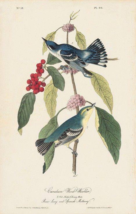 Octavo First Edition, circa 1839, Plate: 86 Cerulean Wood Warbler