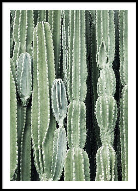 Cactus, julisteet