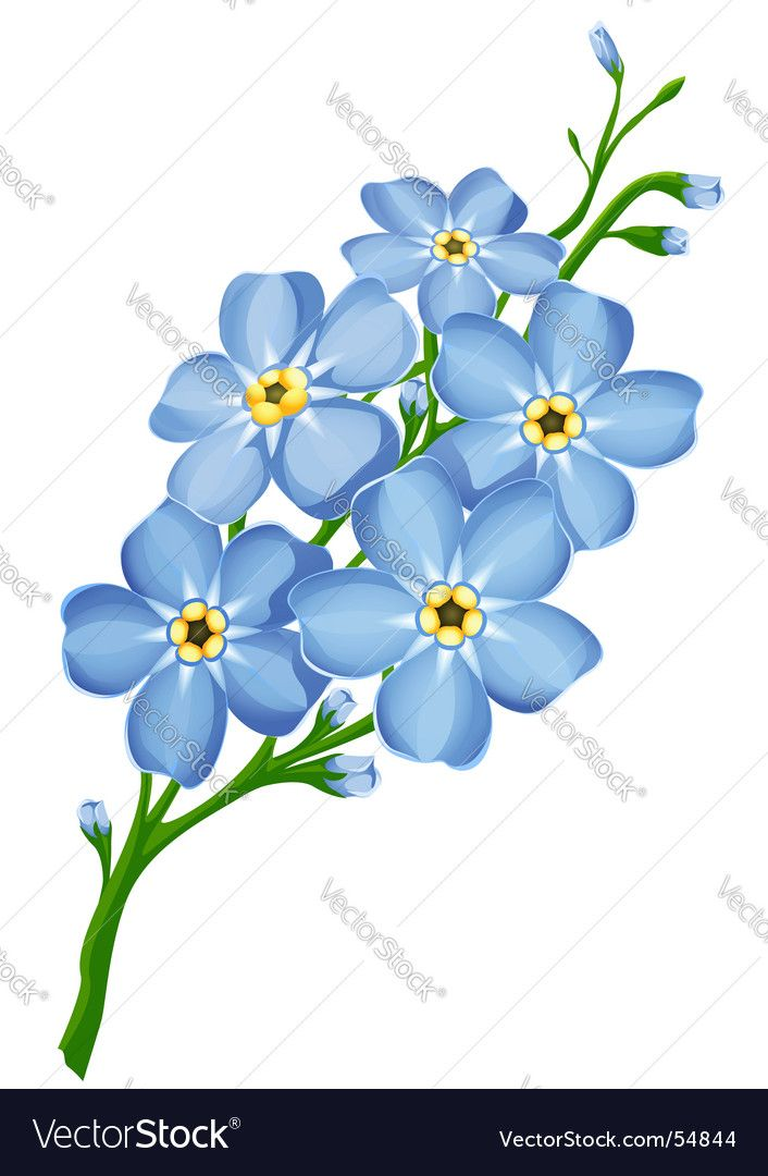branch of blue forget me not flowers. Download a Free Preview or High Quality Adobe Illustrator Ai, EPS, PDF and High Resolution JPEG versions.