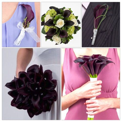 Calla Lily from Costco online