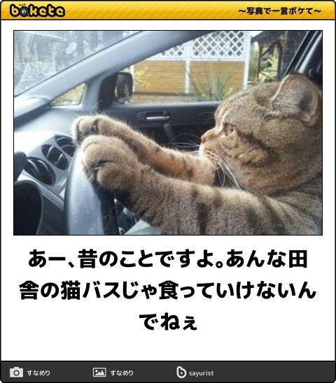 あー、昔のことですよ。あんな田舎の猫バスじゃ食っていけないんでねぇ
