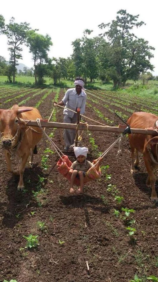 Ploughing the fields.  The kid gets a free ride!