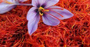 Health benefits of saffron (Zafaran,kesar) and saffron uses