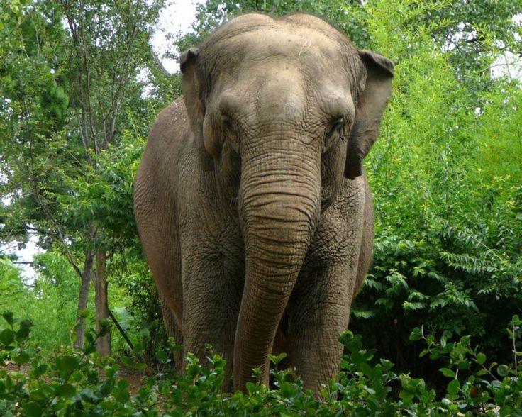 Elefante asiático - 1280x1024 :: Fundos de ecrã