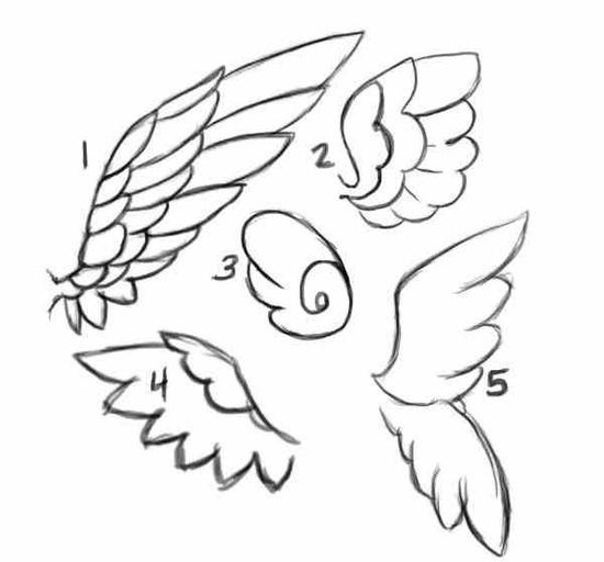 wing drawings