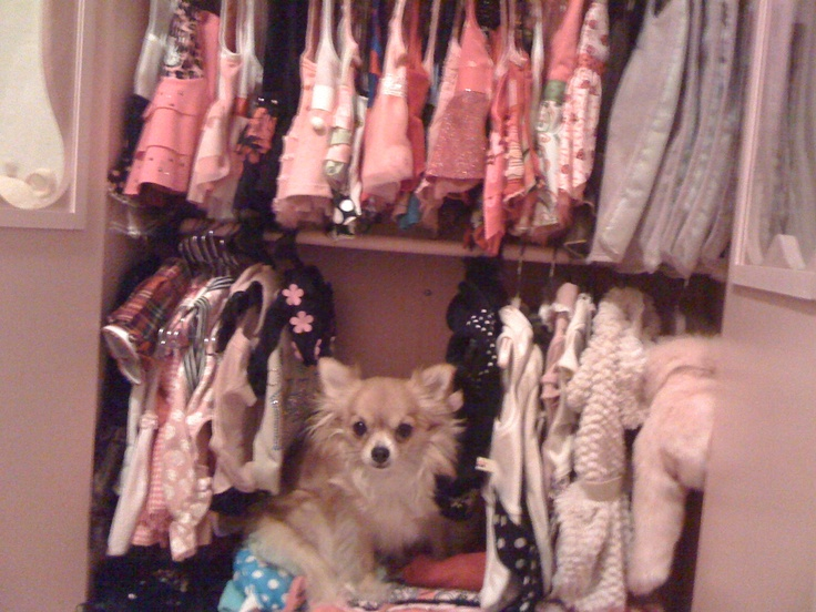 Perfect Dog Has Her Own Closet Full Of Clothes