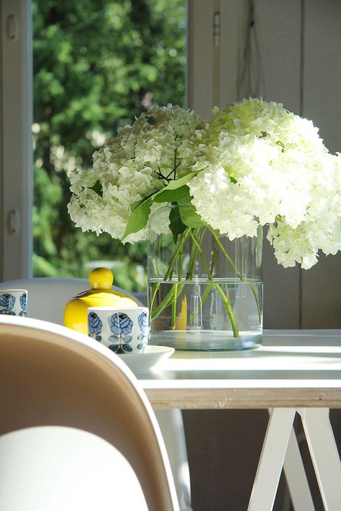 Pinjacolada: Puutarhan hortensiat / Garden hydrangea
