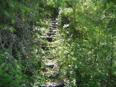 Overgrown staircase...