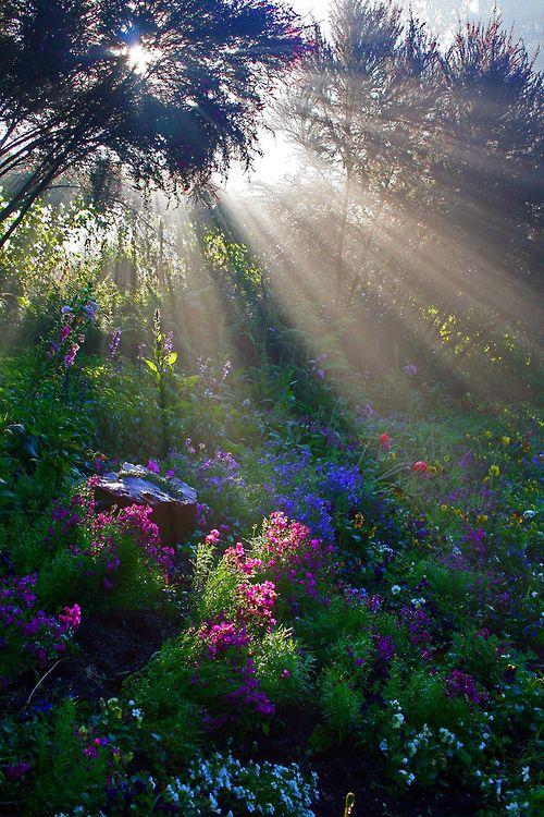 sun rays on flowers ...#spring
