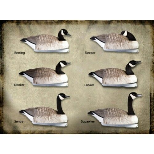 50 Best Decoys Images On Pinterest Waterfowl Hunting