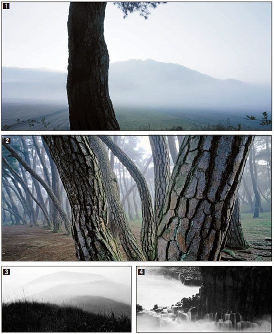 [j Special] 배병우, '소나무' 30년…한국을 대표하는 사진작가 - 중앙일보 뉴스