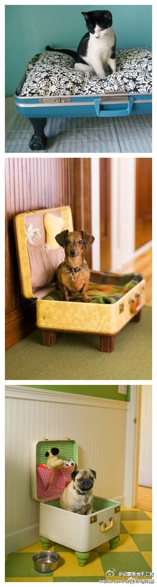 suitcases made into pet beds..Jazzie wants one!