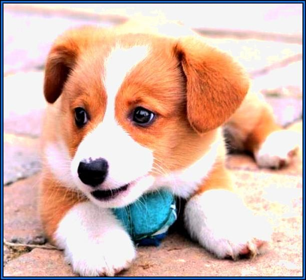 Most Popular Small Medium Sized Dogs