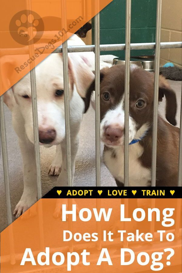 How Long Does It Take To Adopt A Dog Dog Adoption Humane Society Dogs And Kids