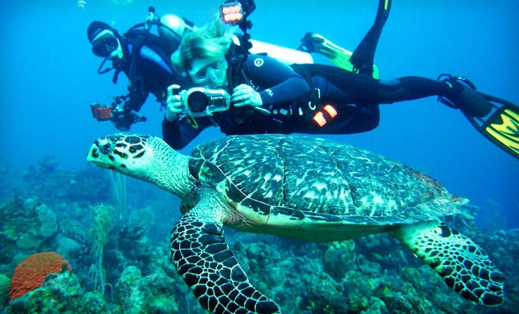Swim with the turtles and dolphins!