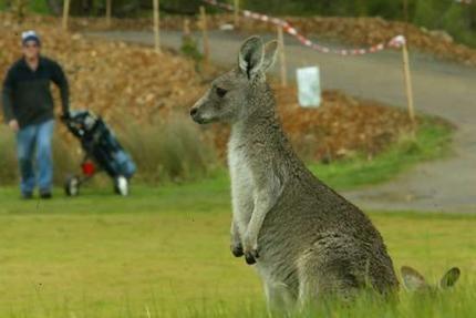 Yarrambat Park Golf Course  Yan Yean Road, Yarrambat  http://www.yarrambatgolf.com.au/