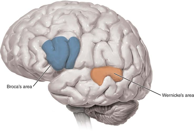 """psy 202 the brain Drew westen, phd, is a professor of psychology at emory university and a consultant on strategic messaging he is the author of """"the political brain: the role of emotion in deciding the fate ."""