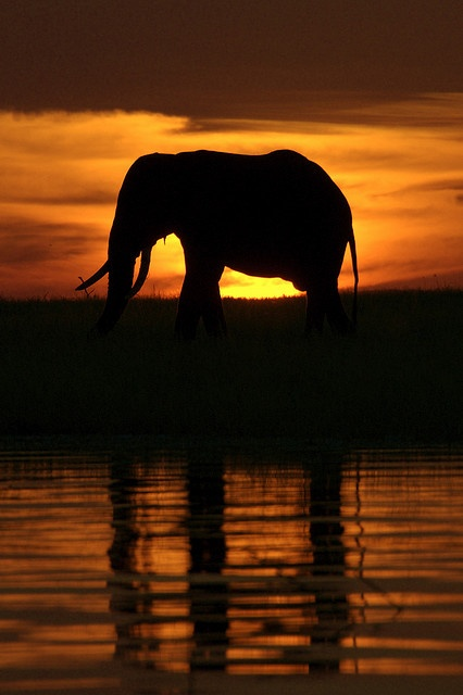 Elephant at Sunset, Lake Kariba, Zimbabwe http://zimbabwebookers.com/reservations/kariba-accommodation-zimbabwe/