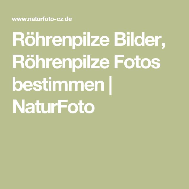Röhrenpilze Bilder, Röhrenpilze Fotos bestimmen   NaturFoto