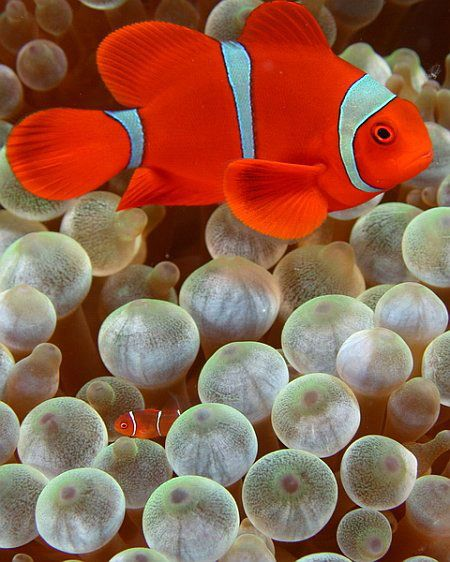Beauty of Nature – Colorful Ocean Life   Animals   EatnineGhost