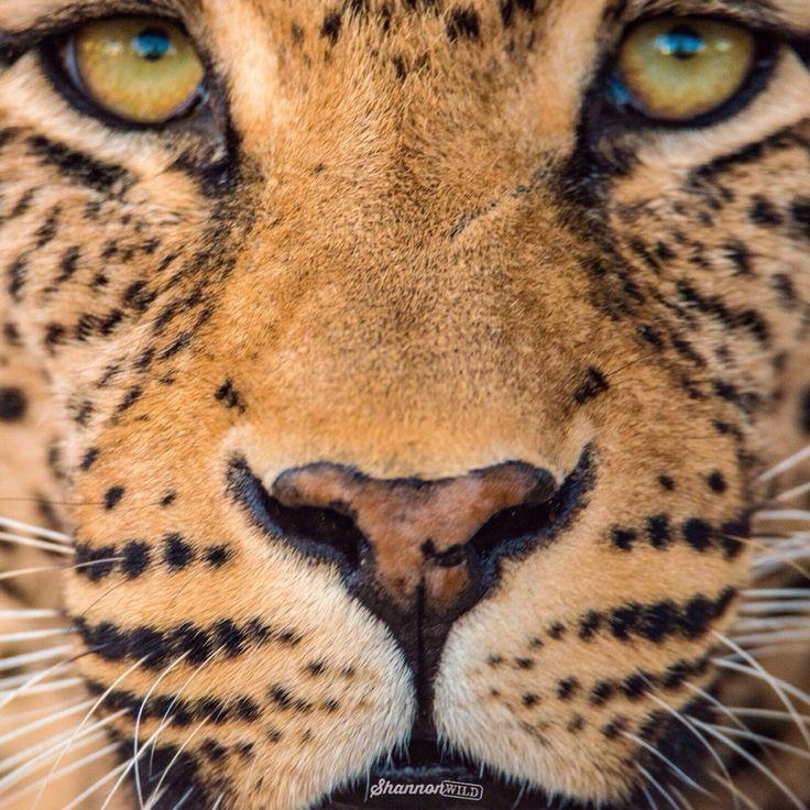 Official blog of wildlife photographer Shannon Benson aka Shannon Wild