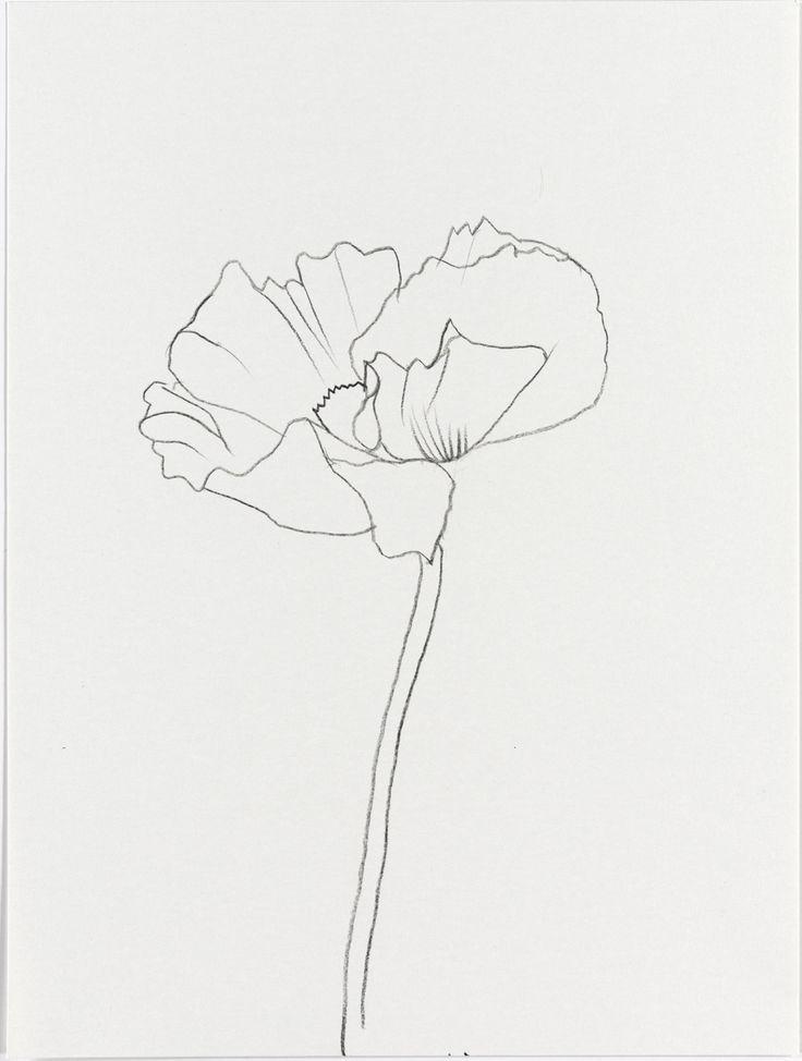 Poppy Line Drawing Tattoo : Best poppy drawing ideas on pinterest