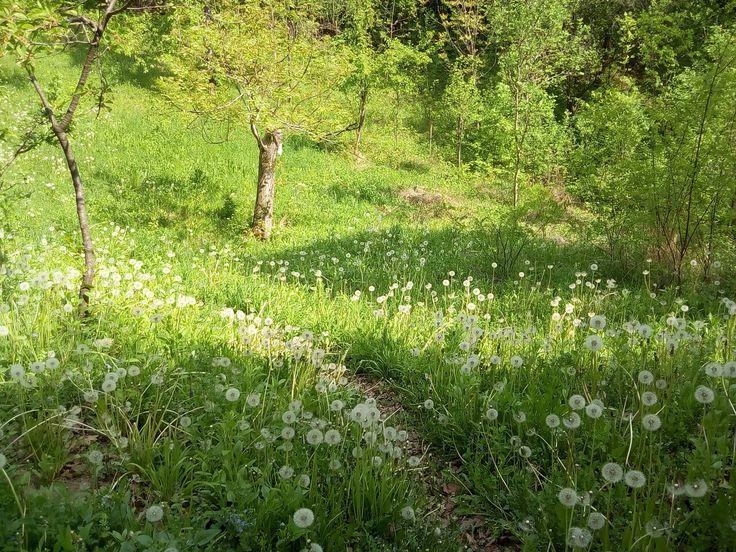 Romania, Nistoresti a fairy land in the real life