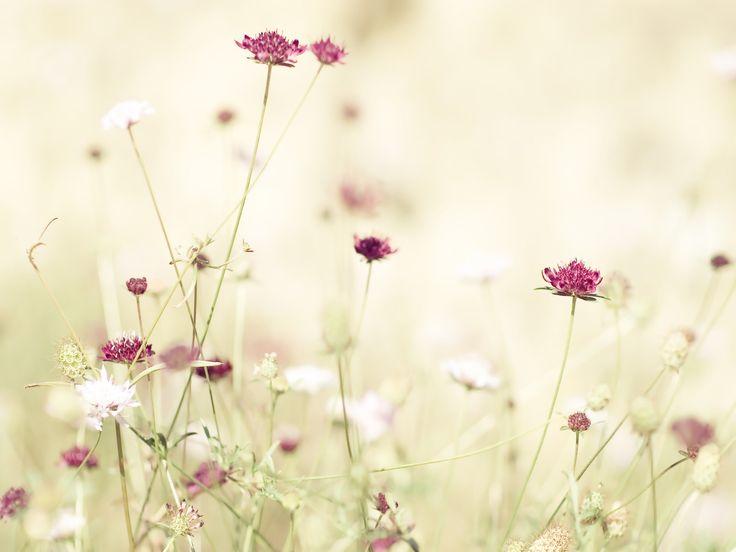 En F. La Alquería encontrara todo lo que precise en decoración floral para bodas, celebraciones, ramos, centros de flor, decoraciones, en natural y artificial