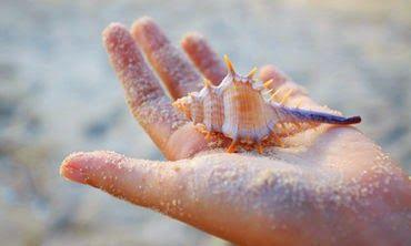 Siebert Realty Sandbridge Beach Virginia Beach Rentals VA Vacation Rentals Beach Home Condo Hotels: shelling
