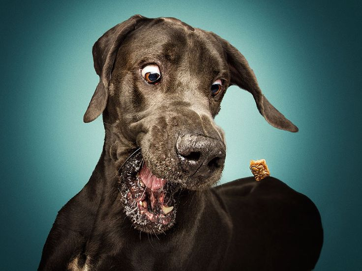 #cães #cachorros #lista #fotografia #fotos #engraçadas #guloseima