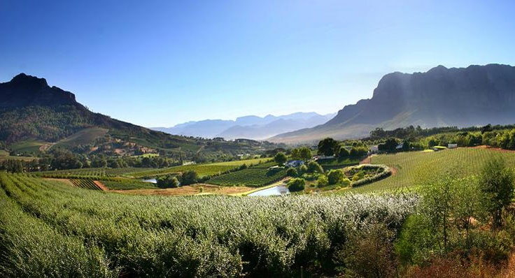 Alluvia Specialist Winery and PRC (Stellenbosch)    Alluvia encapsulates the complete spirit of wine, our land  blessed with tiny fertile alluvial deposits of Table Mountain Sandstone and Granite which gives  us a perfect platform to produce world class wines of integrity.