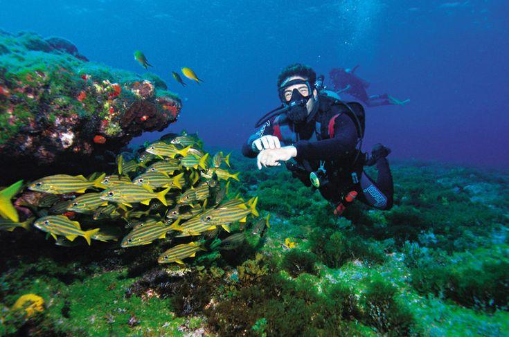 Conheça os melhores pontos de mergulho no Brasil   Guia Viajar Melhor