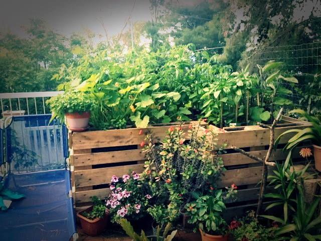 #G.vegetablegarden #ortointerrazza #piccoliortidomesticicrescono #ortocapovolto #ortopallet