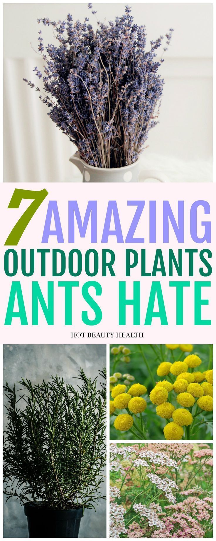 These Ant Repellent Plants Are Great Gardening Hacks For Your Home They Re Also A Lot Of Safer Than Toxic Sprays And Wi Outdoor Pflanzen Gartenarbeit Pflanzen