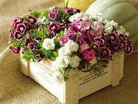 цветы: 48 тыс изображений найдено в Яндекс.Картинках