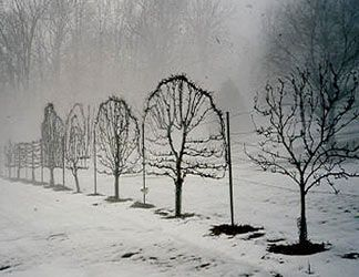 espaliered fruit trees: Trees Art, Apples Trees, Fence Ideas, Espalier Fruit Trees, Espalier Trees, Simple Gardens, Heart Shape, Gardens Art, Winter Gardens