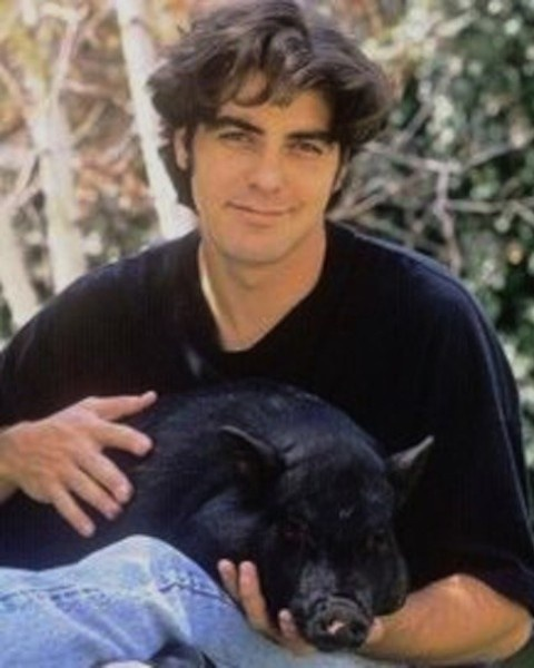 While George Clooney may have a playboy reputation, he has had at least one true love in his life: Max the pot-bellied pig. Clooney originally adopted Max for then-girlfriend Kelly Preston, but kept Max after they split. Sadly, Max passed away  in 2006, after a long and lavish life. Credit: Wikimedia