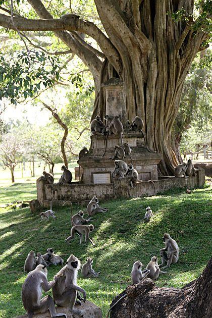 Anuradhapura's Sacred City. Kijk voor meer reisinspiratie op www.nativetravel.nl