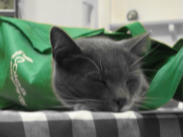 Cat in the bag otherwise known as takeaway.