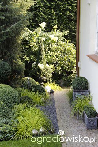 Ogród nie tylko bukszpanowy - część III - strona 20 - Forum ogrodnicze - Ogrodowisko