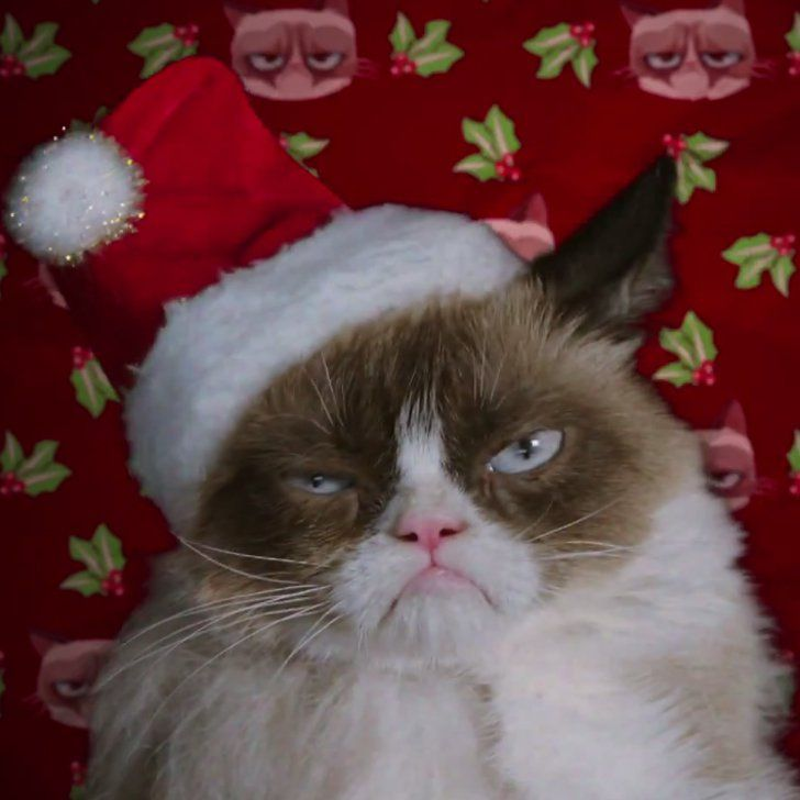 Pin for Later: The First Trailer For the Grumpy Cat Film Is Here!