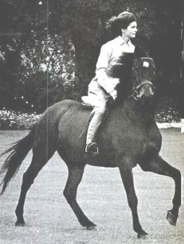 Sardar: Jackie Kennedy's horse presented to her by Pakistani President Mohammad Ayub Khan during her visit to Pakistan's annual horse and cattle show in Lahore March 23, 1962.
