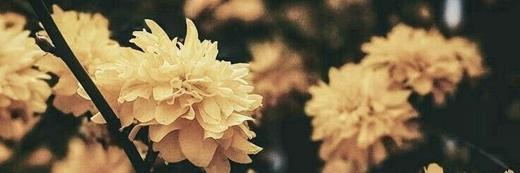 Flower Twitter Header Flower Header Yellow Flowers Twitter Header Aesthetic