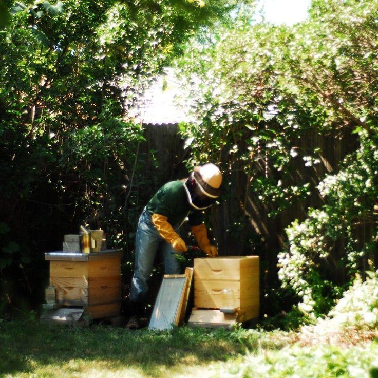 The Best Hive For The Backyard Beekeeper   Backyard Ecosystem  #backyardbeekeeper