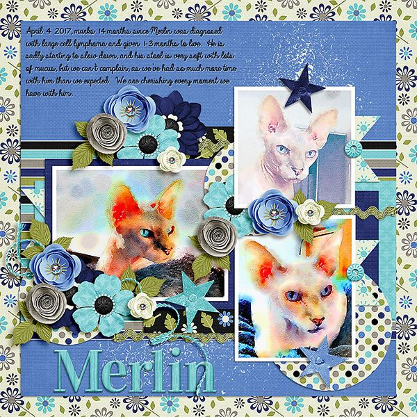 Merlin, our Sphynx cat who is fighting lymphoma.  Photos manipulated with the Waterlogue app for iOS.      Template - Life is adventure 3.  - Tinci Designs  http://store.gingerscraps.net/Life-is-adventure-3..html    Kit - Look on the Bright Side - Just So Scrappy