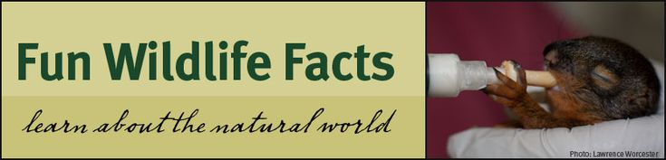 10 γεγονότα για τα ζώα που πιθανόν δεν ξέρατε μέχρι σήμερα.