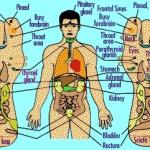 Cara Mengetahui Gejala Penyakit Dengan Terapi Pijat Refleksi. #infographics #health