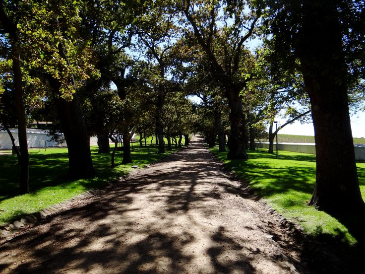 Oak tree-lined drives at Groot Constantia Estate only add to the rustic beauty that this historic wine estate already exudes.