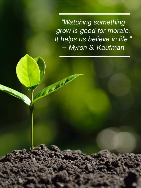 Flowering Wisdom Gardening Quotes From Eagelson Landscape