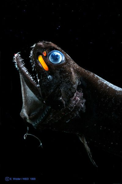 Pez de las profundidades--deep sea criiter
